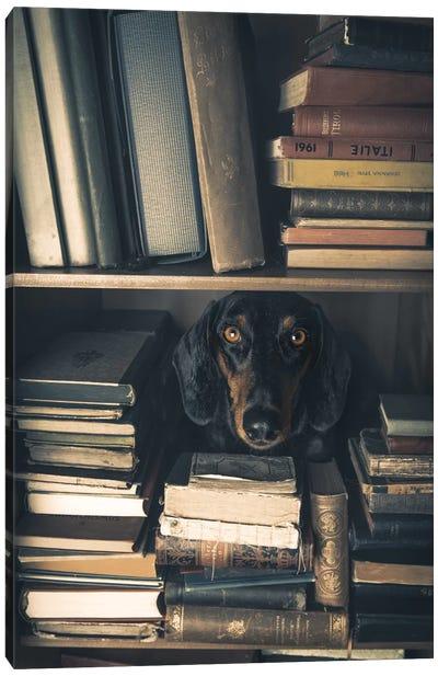 Der Kleine Bibliothekar - Little Librarian Canvas Art Print