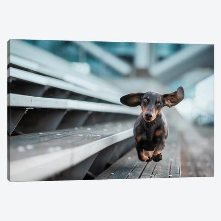 A Little Dog Runs Through The World Canvas Print #OXM4537} by Heike Willers Art Print