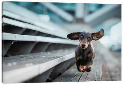 A Little Dog Runs Through The World Canvas Art Print