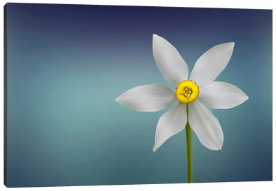 Flower Of Paradise Canvas Art Print