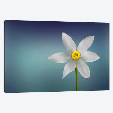 Flower Of Paradise I Canvas Print #OXM453} by Bess Hamiti Canvas Print