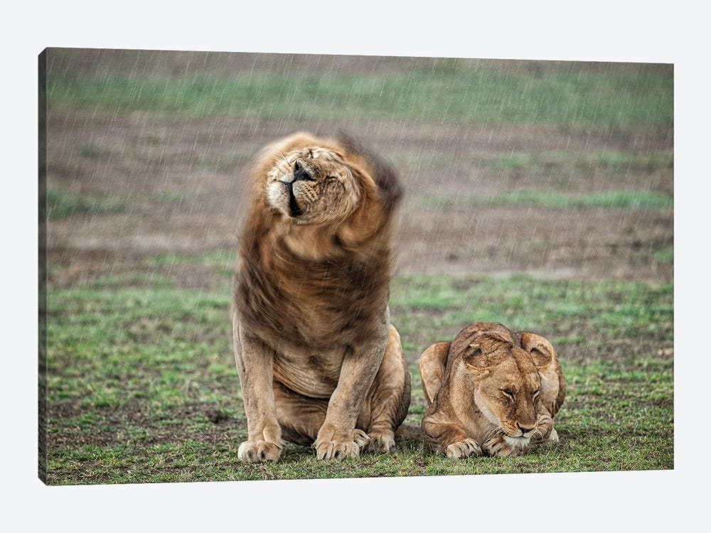 Shake Your Mane by Massimo Felici 1-piece Canvas Art