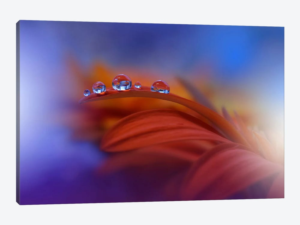 Metamorphosis... by Juliana Nan 1-piece Canvas Wall Art