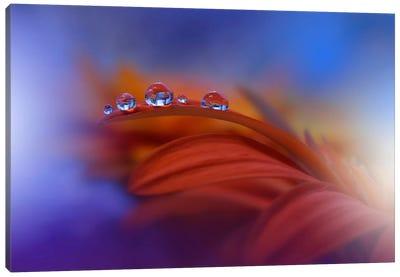 Metamorphosis... Canvas Art Print