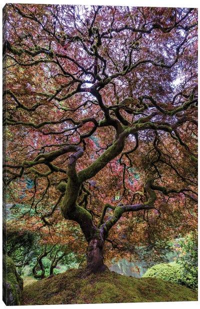 Japanese Maple Tree Canvas Art Print