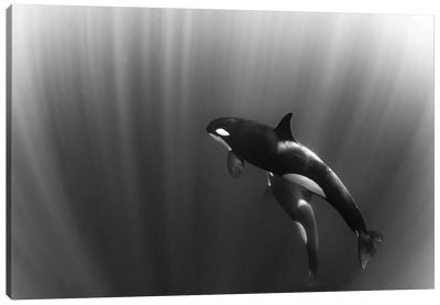 Orca's Dream Canvas Art Print