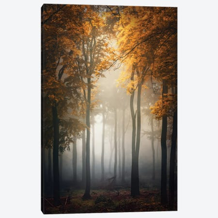 Fall Canvas Print #OXM4565} by Patrick Aurednik Canvas Artwork