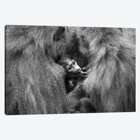 Welcome Baby Canvas Print #OXM4584} by Sergio Saavedra Ruiz Canvas Artwork