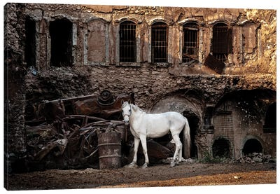 White Horse In A War Zone. Canvas Art Print