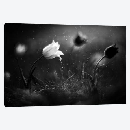Steppe Flower 3-Piece Canvas #OXM4618} by Vadim Fedotov Art Print