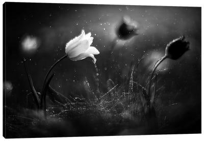 Steppe Flower Canvas Art Print