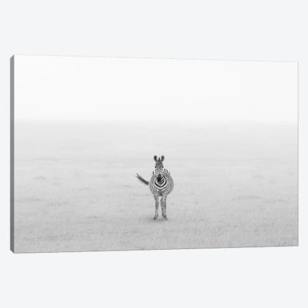 Lonely Zebra Canvas Print #OXM4619} by Yun Wang Canvas Print