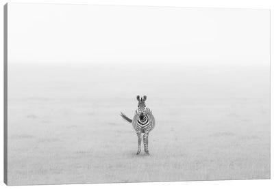 Lonely Zebra Canvas Art Print