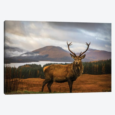 Scottish Stag 3-Piece Canvas #OXM4622} by Adrian Popan Canvas Artwork
