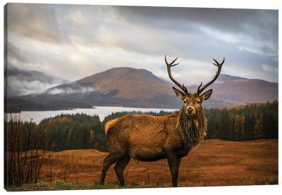 Scottish Stag Canvas Art Print