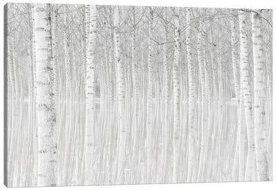 Trees Canvas Art Print