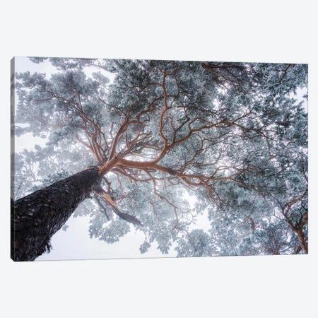 Winter Tree Lines Canvas Print #OXM4625} by Ales Krivec Canvas Art Print