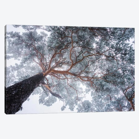 Winter Tree Lines Canvas Print #OXM4625} by Ales Krivec Canvas Art Print