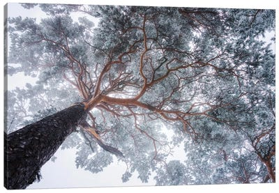 Winter Tree Lines Canvas Art Print
