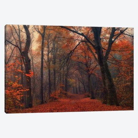 Decorative Forest Canvas Print #OXM4637} by Anton van Dongen Canvas Artwork