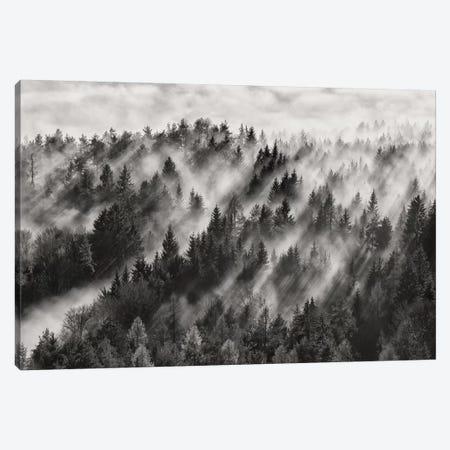 Sundance No.1 Canvas Print #OXM4659} by Davorin Baloh Canvas Art Print