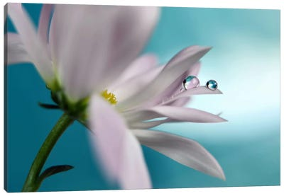 In Turquoise Company Canvas Art Print