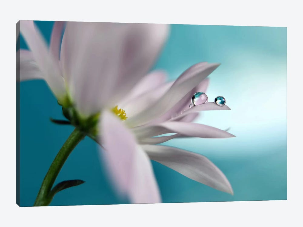 In Turquoise Company by Heidi Westum 1-piece Canvas Print