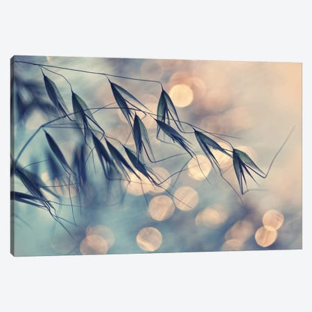 Leaning In The Wind Canvas Print #OXM4662} by Dimitar Lazarov Canvas Artwork