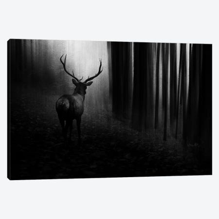 Stag 3-Piece Canvas #OXM4663} by Doris Reindl Canvas Art