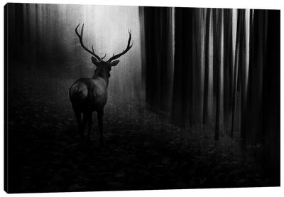 Stag Canvas Art Print