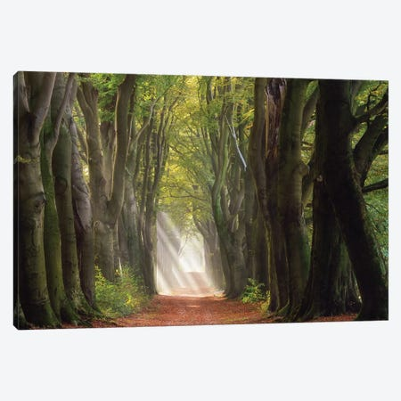 A Glorious Day Canvas Print #OXM4665} by Ellen Borggreve Canvas Art Print