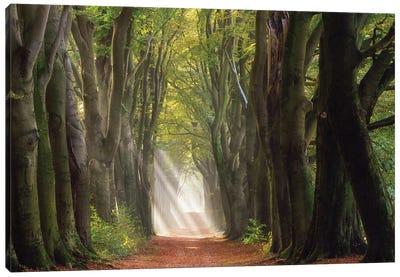 A Glorious Day Canvas Art Print