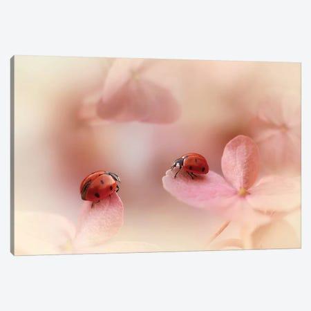 Ladybugs On Pink Hydrangea. Canvas Print #OXM4667} by Ellen van Deelen Art Print