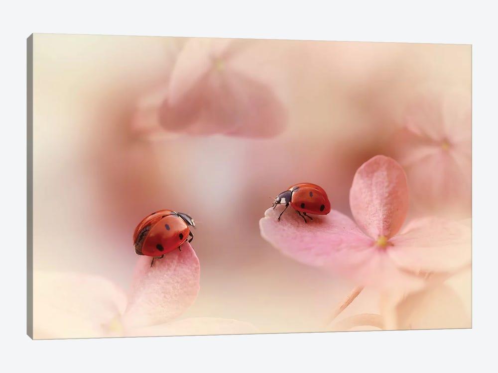 Ladybugs On Pink Hydrangea. by Ellen van Deelen 1-piece Canvas Wall Art