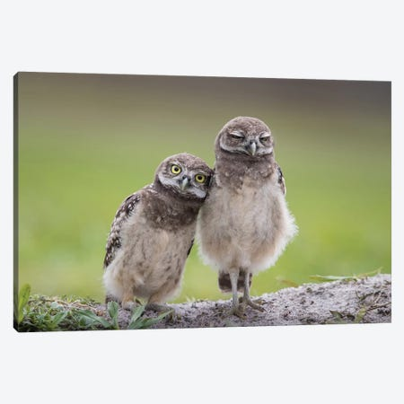 Friends Canvas Print #OXM4678} by Greg Barsh Canvas Print