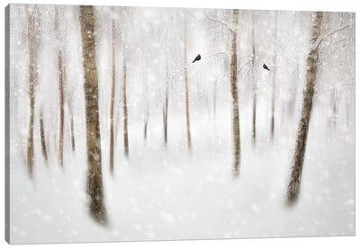 Winter Birches Canvas Art Print