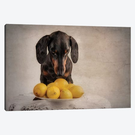 When Life Gives You Lemons... Canvas Print #OXM4688} by Heike Willers Canvas Artwork