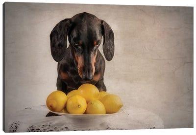 When Life Gives You Lemons... Canvas Art Print