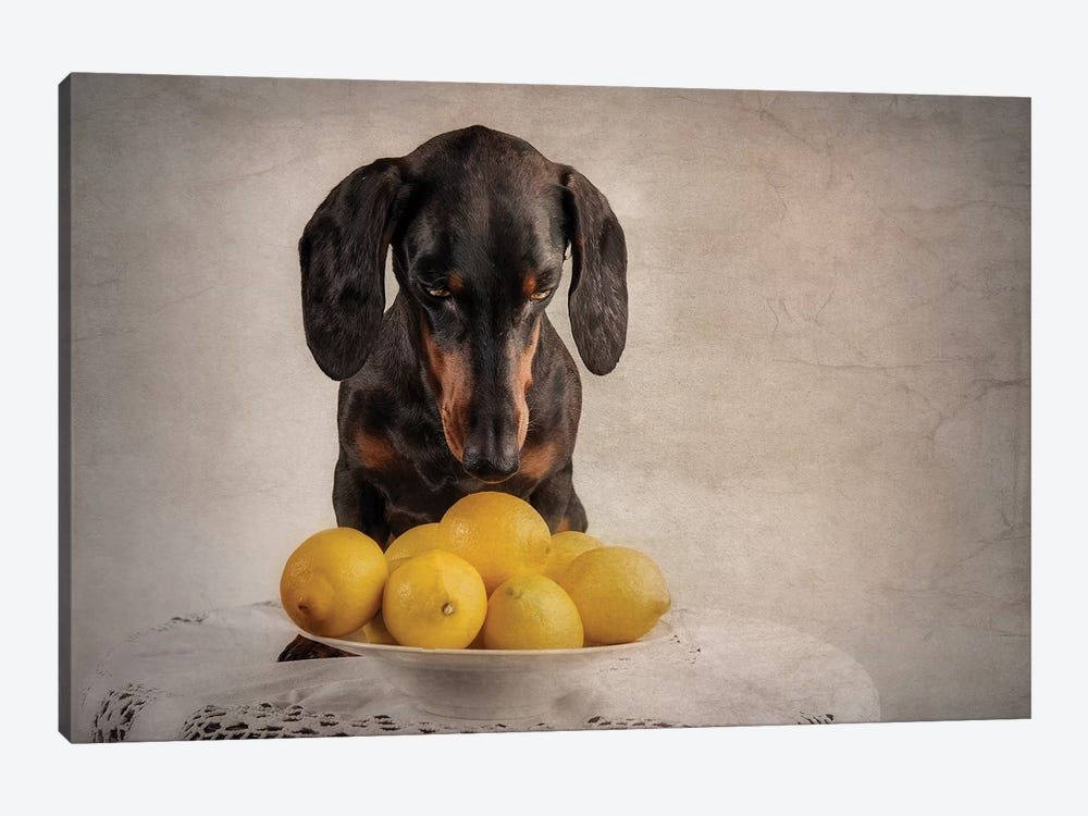 When Life Gives You Lemons... by Heike Willers 1-piece Canvas Print