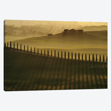 Cypress Shadows Canvas Print #OXM4698} by Jarek Pawlak Canvas Print