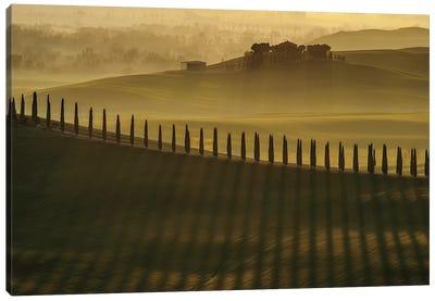 Cypress Shadows Canvas Art Print