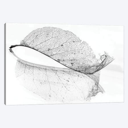 The Old Leaf Canvas Print #OXM4710} by Katarina Holmstrom Canvas Art