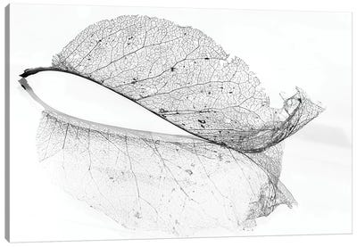 The Old Leaf Canvas Art Print