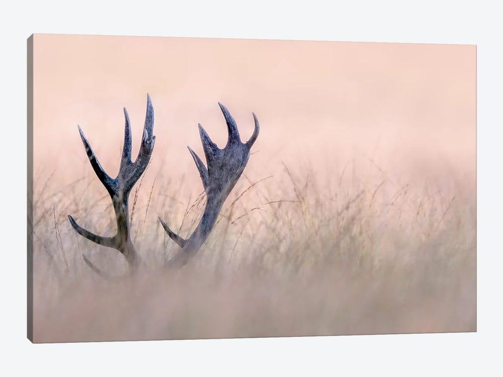 Hide & Seek ( Horn Of Stag) by Kutub Uddin 1-piece Canvas Art Print