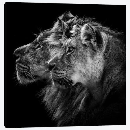 Lion And Lioness Portrait Canvas Print #OXM4713} by Laurent Lothare Dambreville Canvas Artwork
