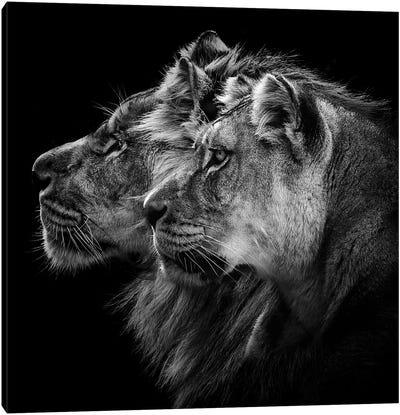 Lion And Lioness Portrait Canvas Art Print
