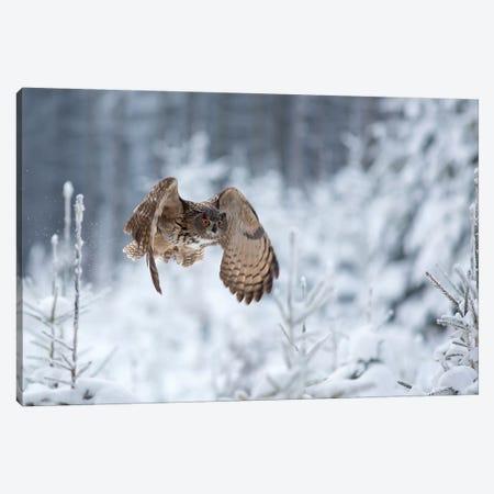 Eurasian Eagle-Owl Canvas Print #OXM4740} by Milan Zygmunt Canvas Art Print