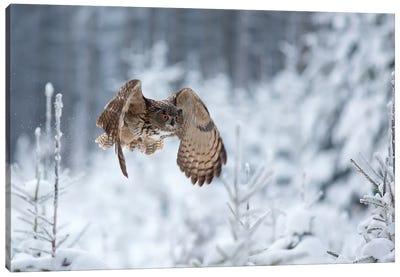Eurasian Eagle-Owl Canvas Art Print