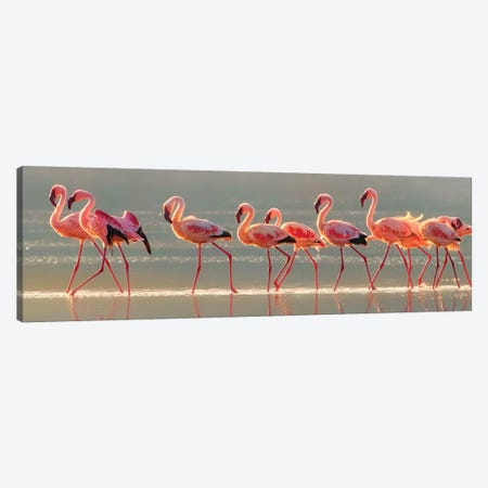 Flamingo Canvas Print #OXM4753} by Phillip Chang Canvas Artwork