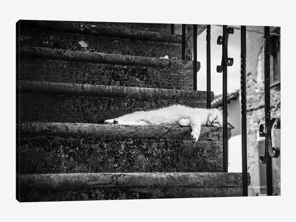 Slow Life by Piera Polo 1-piece Art Print